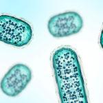 Micro Algae